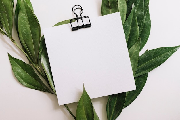 Papel branco em branco com clipe de papel preto decorado com folhas verdes sobre fundo branco Foto gratuita
