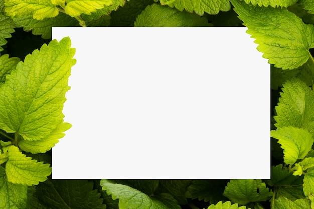 Papel branco liso rodeado por folhas de erva-cidreira verde Foto gratuita