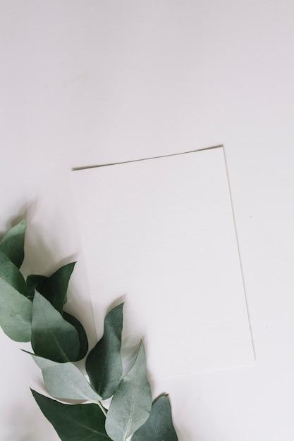 Papel em branco com galho verde isolado no fundo branco Foto gratuita