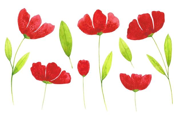 Papoilas vermelhas e clip-arts de folhas verdes conjunto isolado no fundo branco. Foto Premium