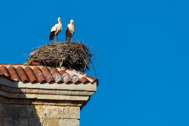 Par de cegonhas fazendo um ninho no telhado de uma igreja. dia de sol e céu azul. Foto Premium