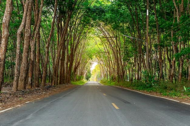 Para-borracha, plantação de borracha látex e borracha de árvores Foto Premium