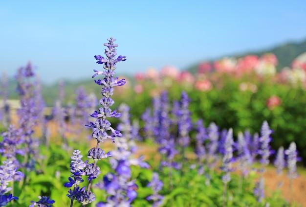 Para me pegar não flor no jardim de verão. Foto Premium