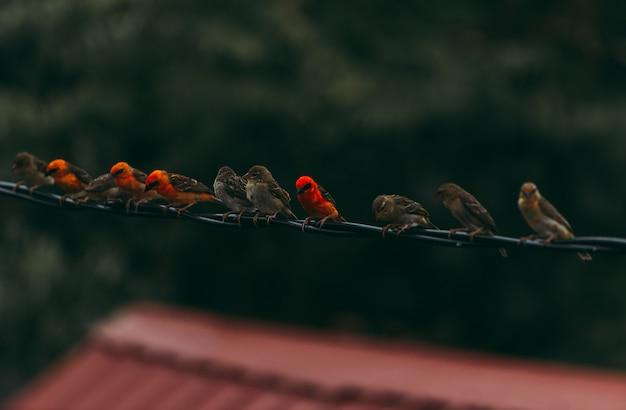 Pardais de madagascar na fila. grupo de amigos a passar tempo juntos Foto Premium