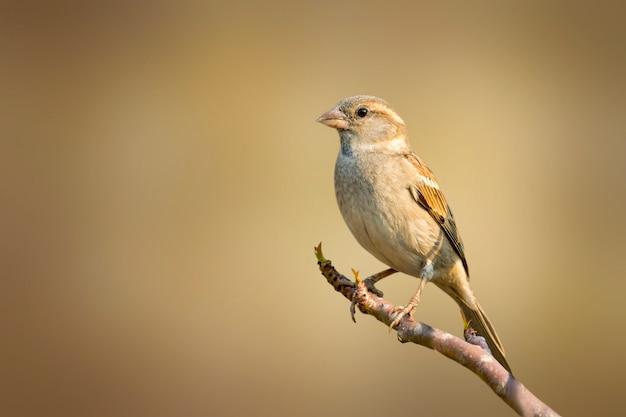Pardal em um galho de árvore. pássaro. animais. Foto Premium