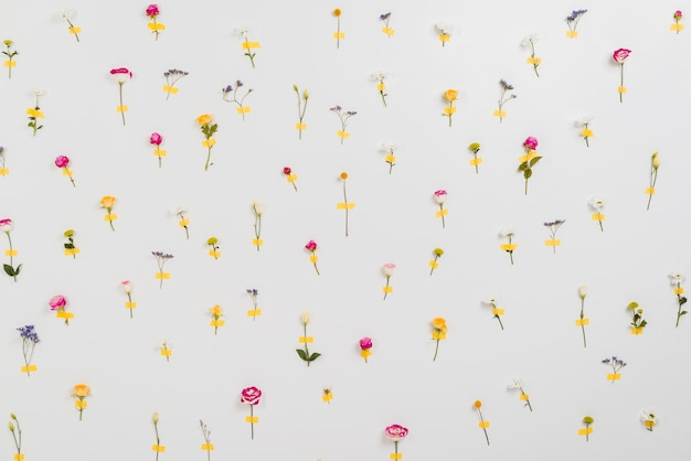 Parede de flores anunciando o tempo de primavera Foto gratuita