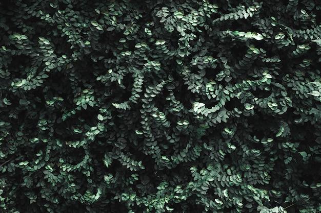 Parede de folhas verde-escuro Foto Premium