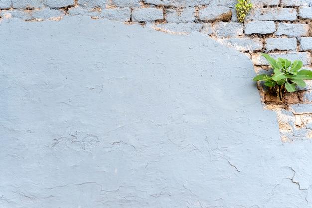 Parede de tijolo cópia espaço plano de fundo e planta Foto Premium