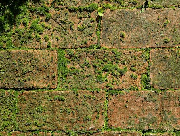 Parede de tijolos abandonada com plantas musgosas verdes crescendo entre tijolos de terracota Foto Premium