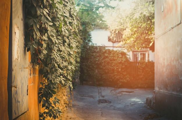 Parede verde, vista para o pátio, kherson Foto Premium