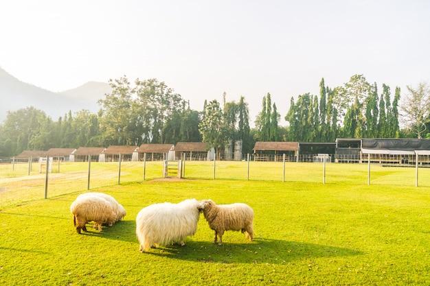 Parque abstrato borrão com campo verde Foto gratuita