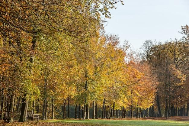 Parque cheio de árvores e céu claro Foto gratuita