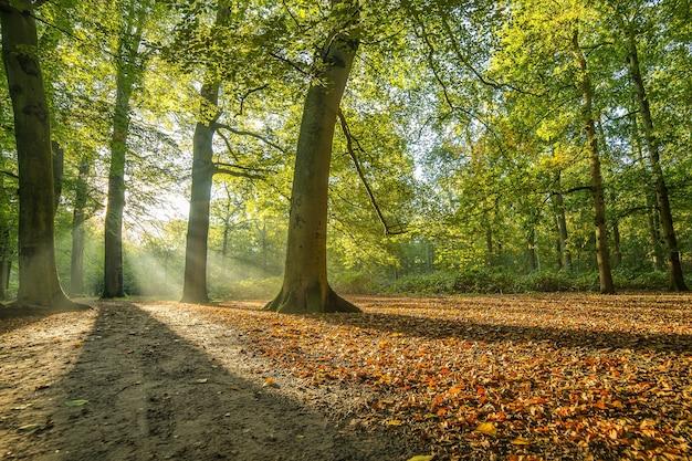 Parque coberto de árvores sob a luz do sol Foto gratuita