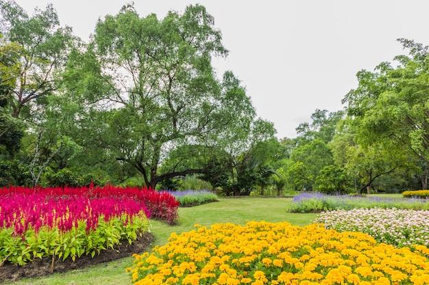 Parque com árvores e grama Foto Premium