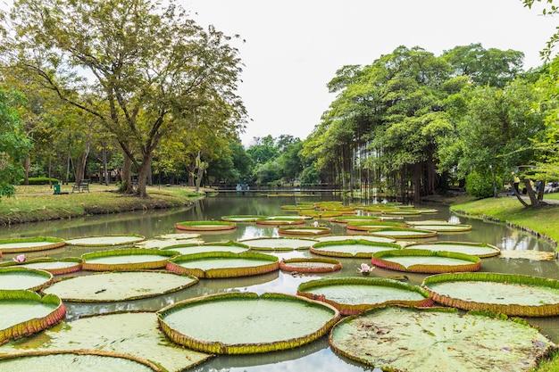 Parque com árvores e gramados Foto Premium