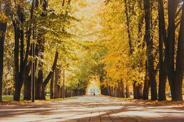Parque da cidade de outono Foto Premium