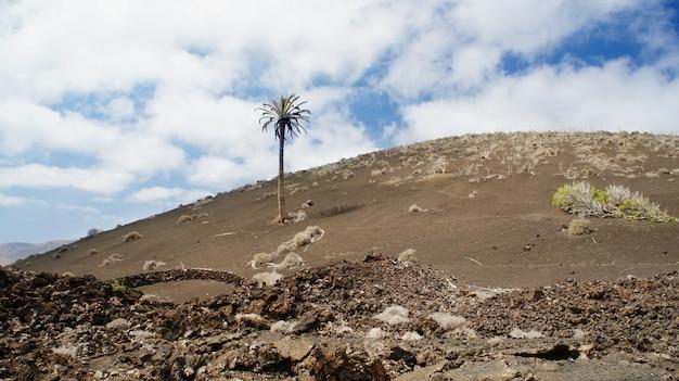 Parque nacional de timanfaya em lanzarote, ilhas canárias, espanha Foto Premium