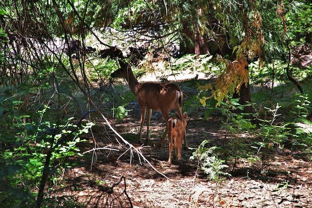 Parque nacional de yosemite, na califórnia, eua Foto Premium
