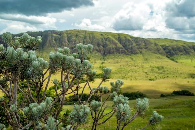 Parque nacional, serra, canastra, brasil Foto Premium