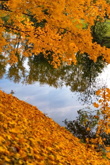 Parque outono com lago Foto gratuita