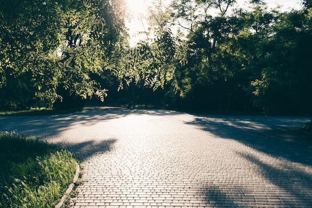 Parque verde verão com trilhas para caminhadas Foto Premium
