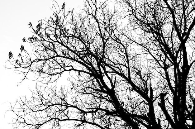 Parte, de, árvore morta, silueta, sem, folheia, isolado, branco Foto Premium