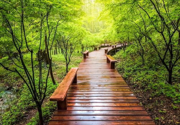 Passarela de madeira e cenário natural verde no verão, calçadão na floresta Foto Premium