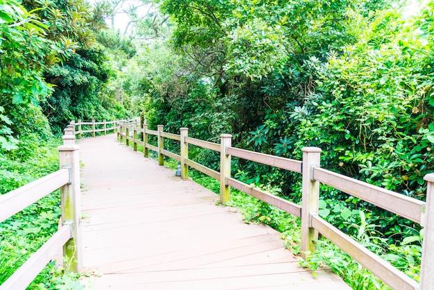 Passarela de madeira em seaseom park na ilha de jeju Foto Premium