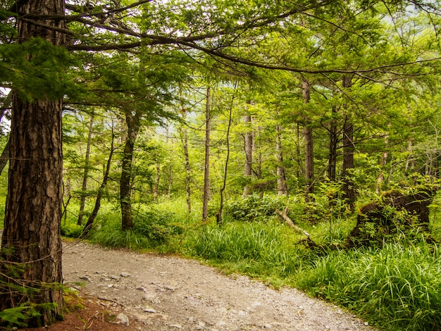 Passarela debaixo da árvore na floresta Foto Premium