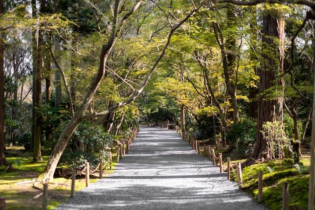 Passarela no jardim e floresta Foto gratuita