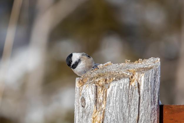 Passarinho em poste de madeira Foto gratuita