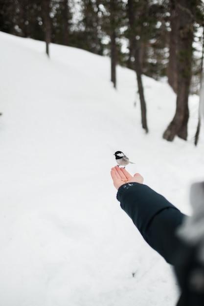 Passarinho fofo pousando na mão de uma garota no inverno Foto gratuita