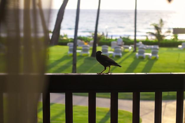 Passarinho na varanda Foto Premium
