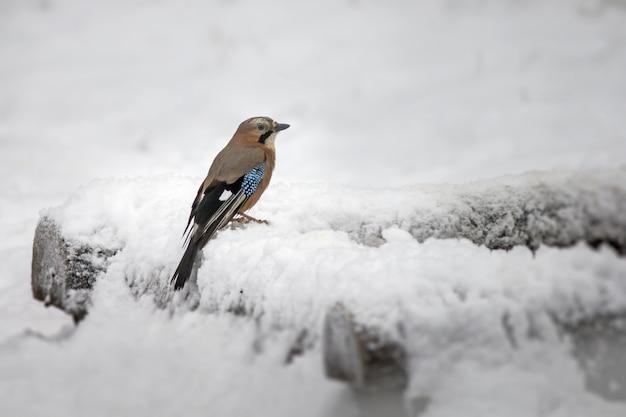 Passarinho no galho coberto de neve Foto gratuita
