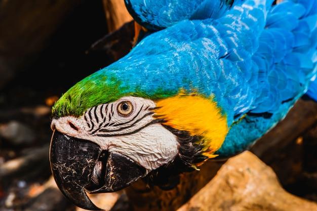 Pássaro amarelo azul bonito arara Foto Premium