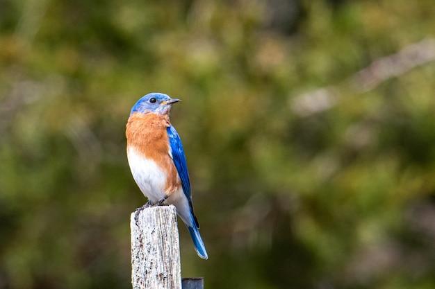 Pássaro azul, marrom e branco sentado em um pedaço de madeira pintada Foto gratuita