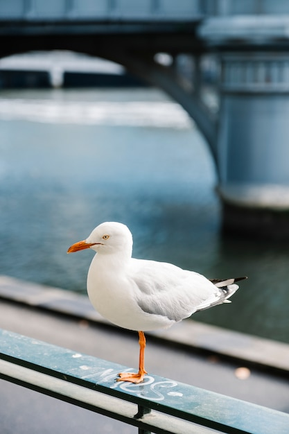 Pássaro branco na cidade Foto gratuita