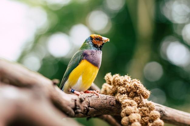 Pássaro colorido em um galho Foto gratuita
