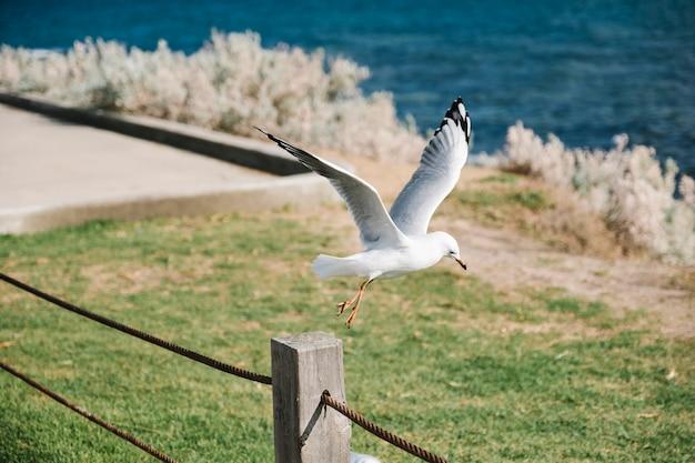 Pássaro começa a voar Foto gratuita