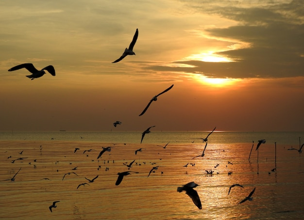 Pássaro de gaivota silhueta voando ao pôr do sol na tailândia Foto Premium