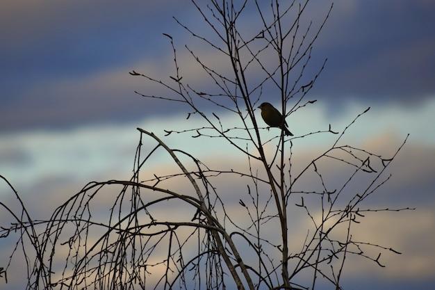 Pássaro na árvore. animal na natureza. fundo colorido natural Foto gratuita