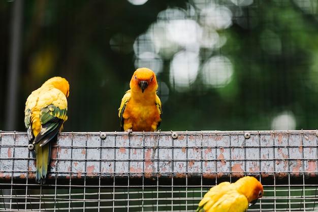 Pássaros amarelos em um recinto Foto gratuita