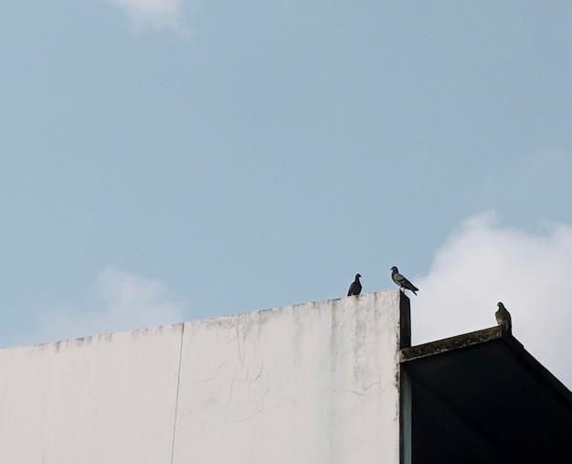 Pássaros empoleirados em uma parede branca Foto gratuita