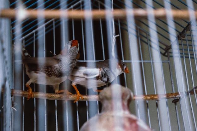 Pássaros enjaulados Foto gratuita