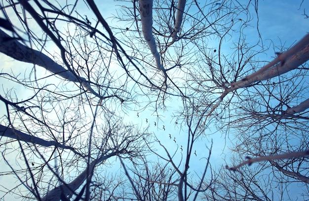 Pássaros no céu seguem as linhas árvores Foto Premium