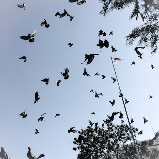 Pássaros no céu Foto gratuita