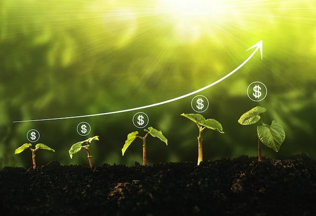 Passo de crescimento de mudas no jardim com o ícone de dólar e o gráfico no fundo ensolarado. conceito de crescimento, lucro, desenvolvimento e sucesso do negócio. Foto Premium