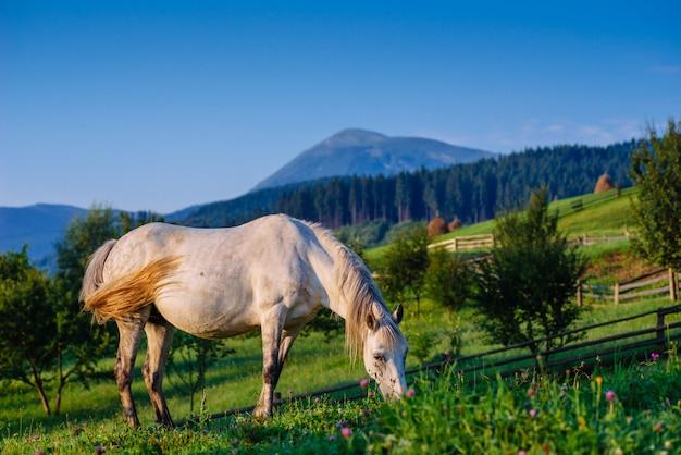 Pastagem de cavalo no verão Foto Premium