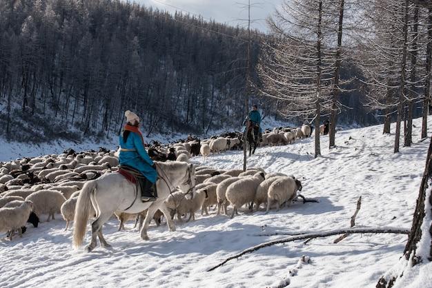 Pastor de menina sentada no cavalo e pastorear o rebanho de ovelhas na pradaria com montanhas cobertas de neve no fundo Foto Premium