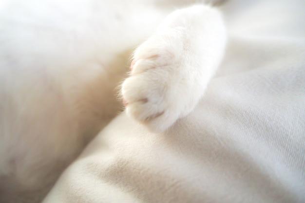 Pata de gato branco adorável adorável animal de estimação na cama suave sentimento férias ideia fundo Foto Premium